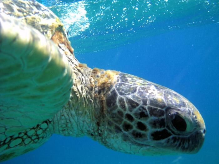 Sea Turtles, Stingrays and Sea Urchins- Oh My!