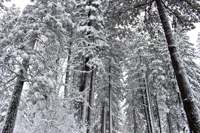 Snow.Snow.Snow!